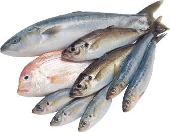 Какую рыбу лучше использовать для мимозы