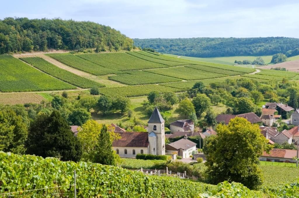 Французский субрегион Cote de L'Aube с обширными виноградниками