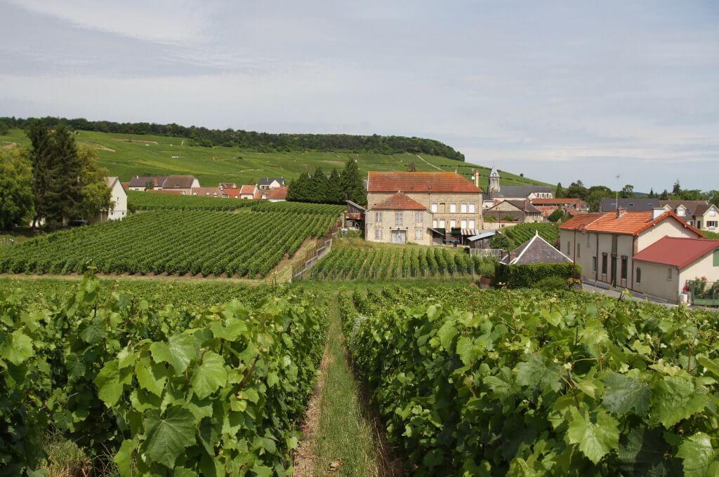 Французский регион Cote des Blancs для создания шампанского