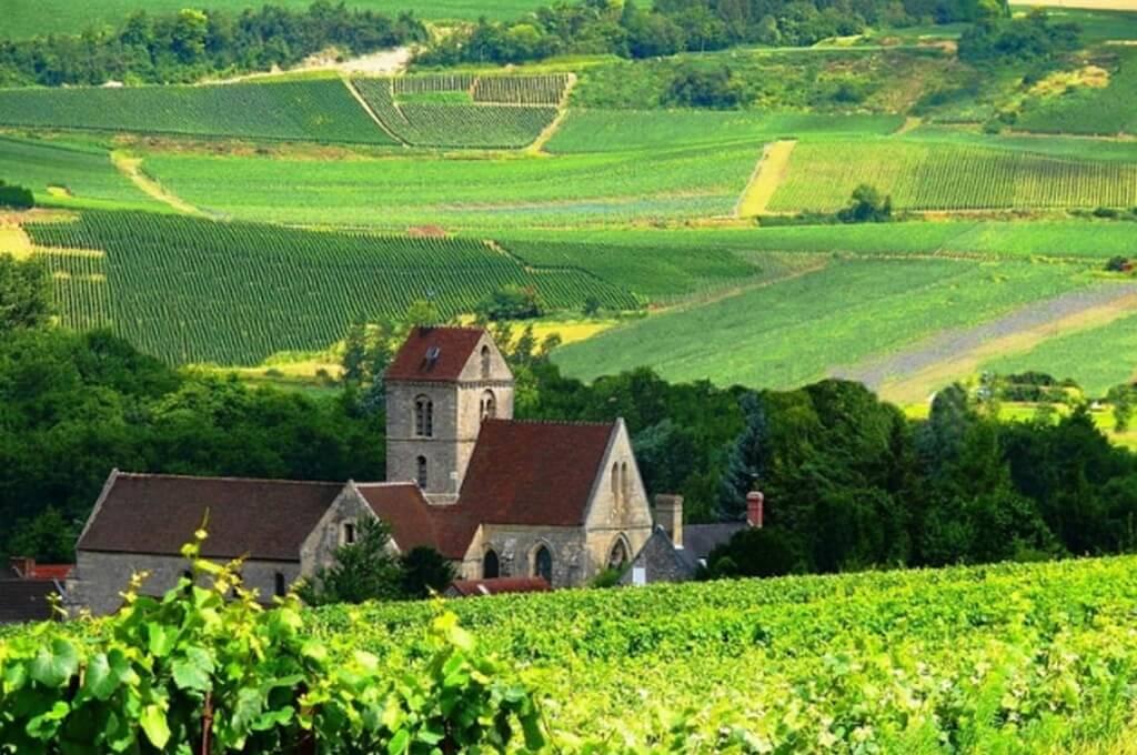 Французский субрегион Vallee de la Marne и виноградник с Пино Менье